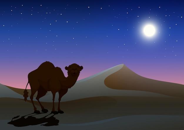 Kamel in der wüste in der nacht