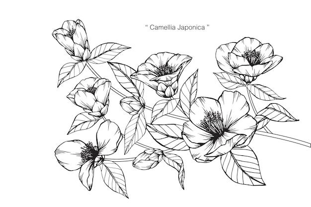 Kamelie japonica