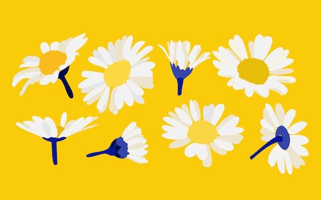 Kamille auf gelbem hintergrund dekorative blumenillustration in der handzeichnungsart