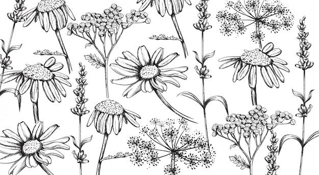 Kamille, lavendel und kräuterblumen im strichgrafikstil. s