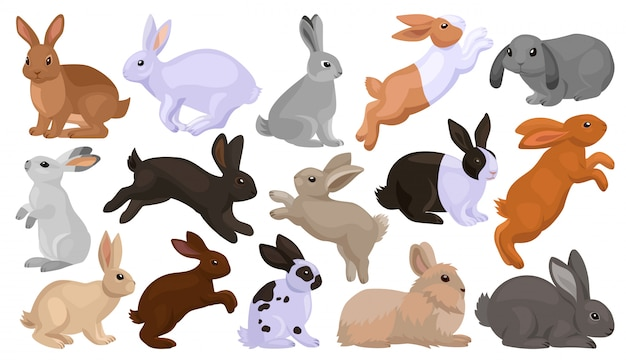 Kaninchen cartoon set symbol