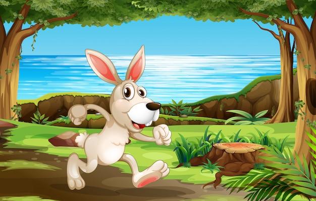 Kaninchen, das in den park läuft