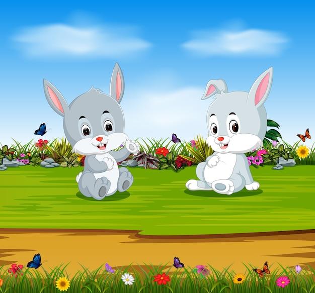 Kaninchen entspannen sich am sonnigen tag mit vollem magen