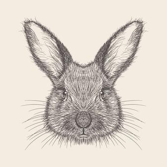Kaninchen-illustration der hand gezeichneten auslegung.