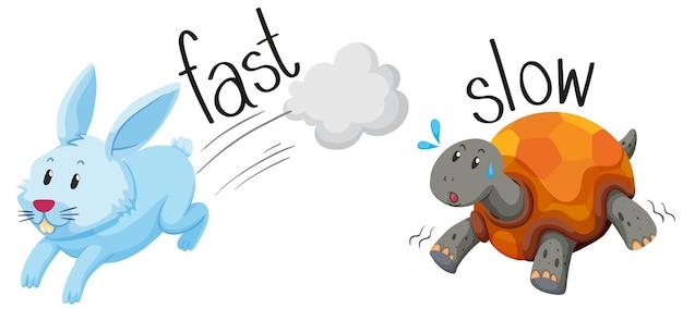 Kaninchen läuft schnell und schildkröte läuft langsam