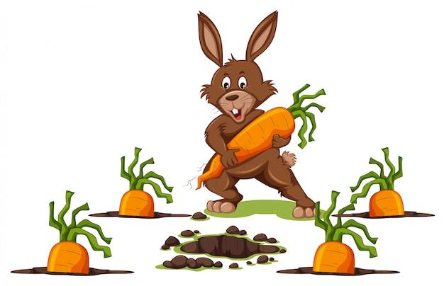 Kaninchen mit karotten-szene