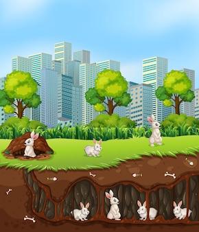 Kaninchen oben und unterirdisch
