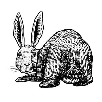Kaninchen schaut isoliert auf weiß zurück