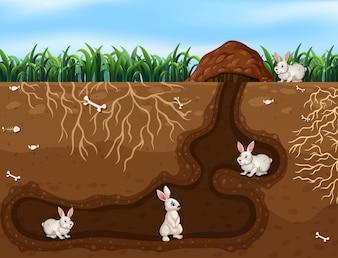 Kaninchenfamilie, die im Loch lebt