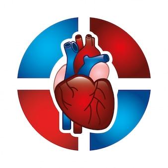 Kardiologiedesign über weißer hintergrundvektorillustration