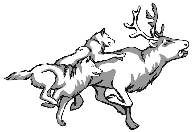 Karibus und indigene völker des nordens russlands. husky-hunde. die hunde treiben die hirsche. vintage schwarz-weiß-zeichnung. vektor-illustration. natur und mensch