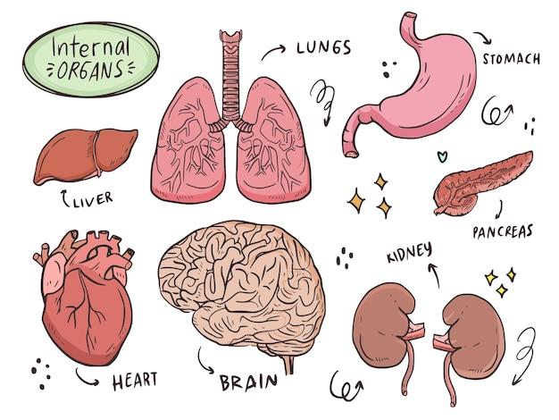 Karikatur der inneren organillustration