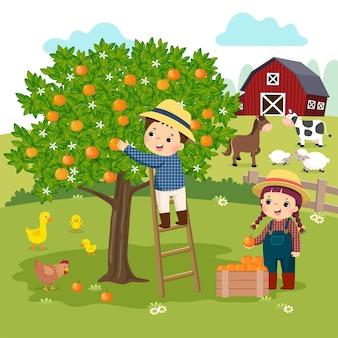 Karikatur des kleinen jungen und des kleinen mädchens, die orangen auf der farm pflücken