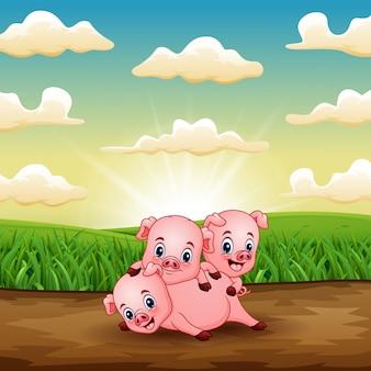 Karikatur drei kleine schweine, die auf feld im sonnenaufgang spielen