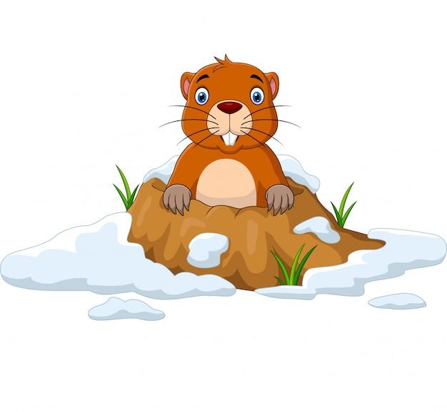 Karikatur groundhog, das aus loch heraus schaut