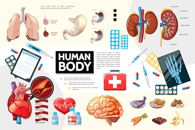 Karikatur menschliche körperanatomie infografiken mit inneren organen lebensmittelpillen und medizinische ausrüstung illustration
