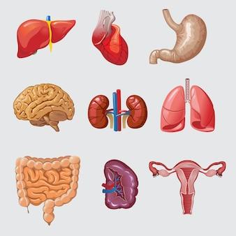 Karikatur menschliche organe eingestellt