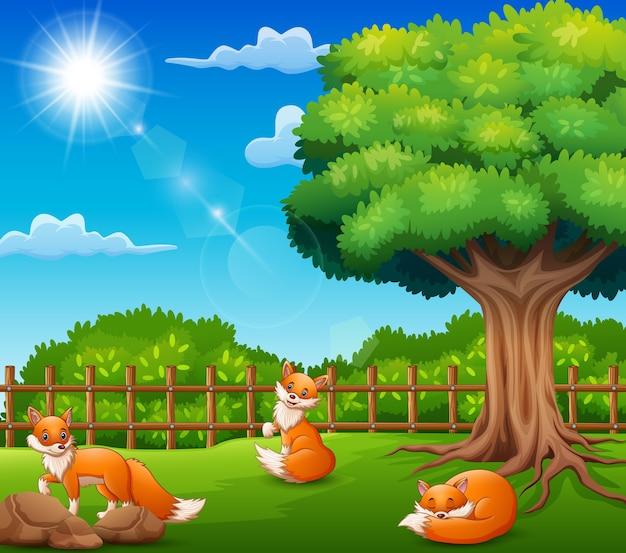 Karikatur mit drei füchsen auf naturszene