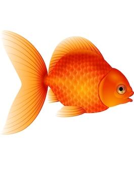 Karikaturgoldfisch lokalisiert auf weißem hintergrund