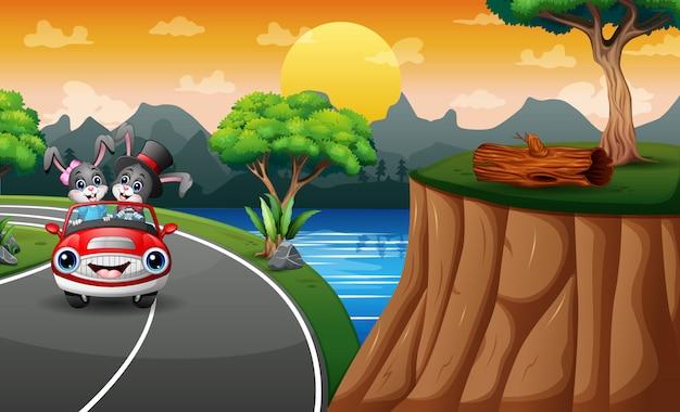 Karikaturhasen, die ein auto entlang der straße reiten