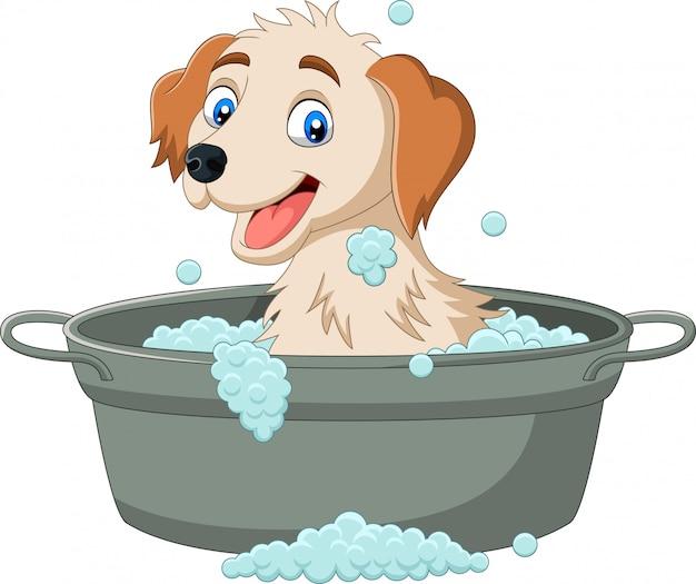 Karikaturhund, der ein bad hat