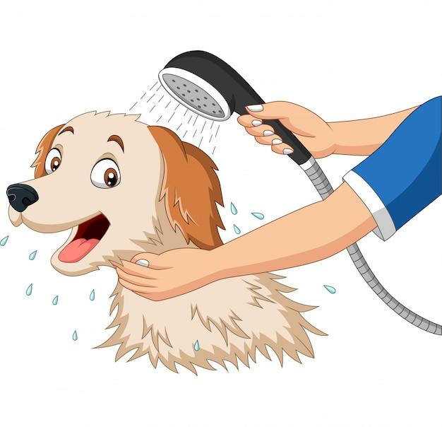 Karikaturhund, der mit dusche badet