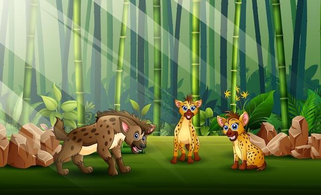 Karikaturillustration von drei hyänen in der bambuswaldillustration
