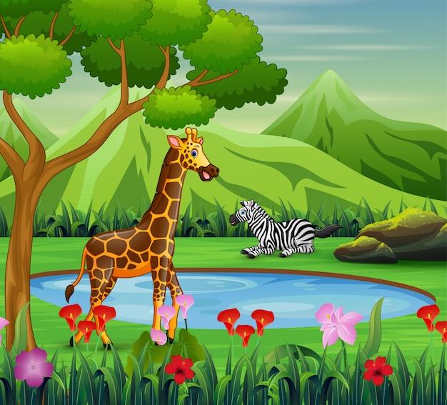Karikaturzebra und -giraffe, die nahe wasserstelle leben