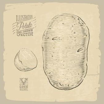 Kartoffel-illustration