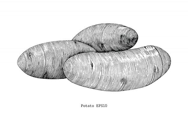 Kartoffel zeichnen weinlese lokalisiert auf weißem hintergrund