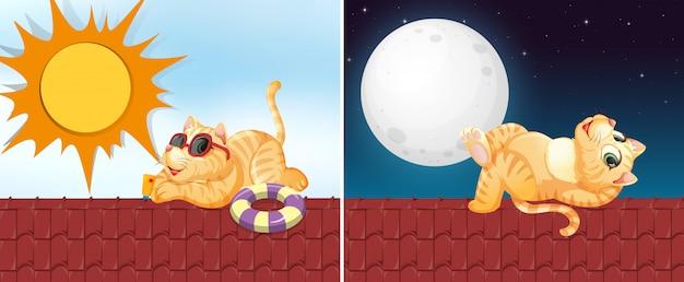 Katze auf dem hausdach