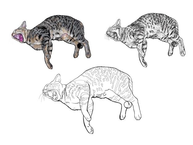 Katze gähnt beim hinlegen