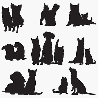 Katze hund