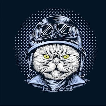 Katze trägt helm