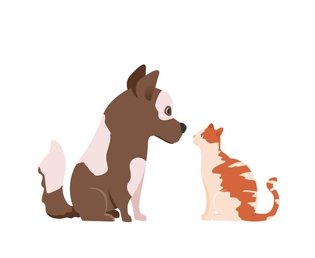Katze und hund schauen sich an