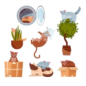 Katzen an lustigen orten: in einer kiste, in einer waschmaschine, auf einer zimmerblume, in einem topf, im weltraum, schlafend auf einem hund.