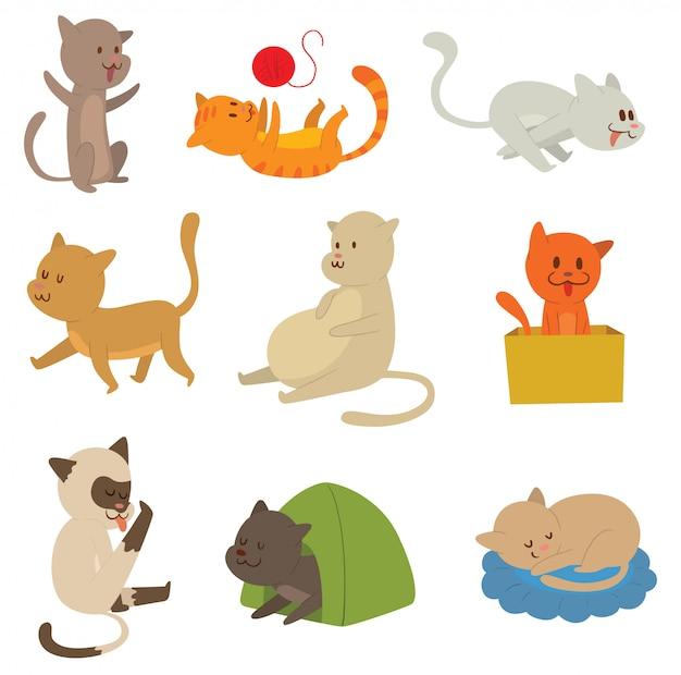 Katzen gesetzt.