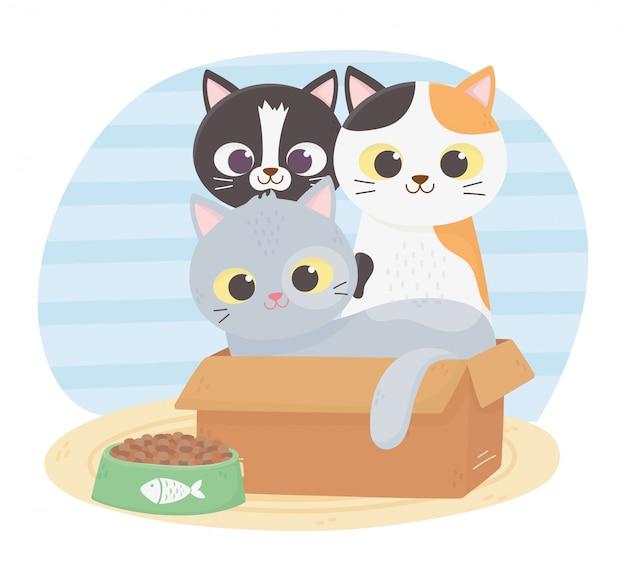 Katzen machen mich glücklich, verschiedene katzen im karton mit futter