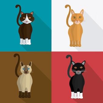 Katzenentwurf.