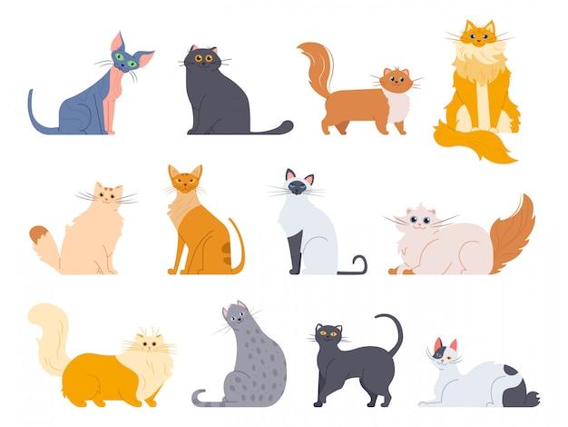 Katzenrassen. niedliche flauschige katzen, maine coon, bobtail, siamesische katze und lustige sphynxkatze, stammbaum züchtet haustiere illustrationsikonen gesetzt. zeichenpaket
