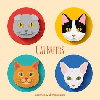 Katzenrassen packen