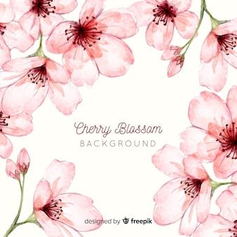 Kirschblüte hintergrund