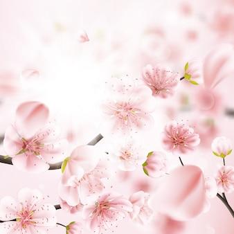 Kirschblüte, sakura-blüten.