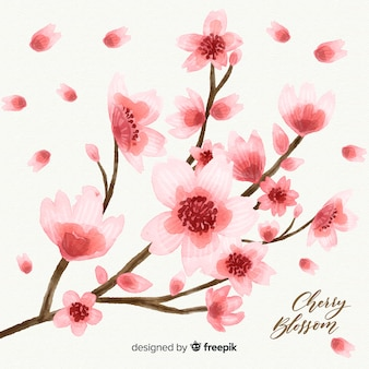 Kirschblüten hintergrund