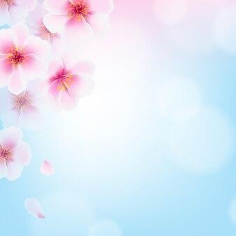 Kirschblumen