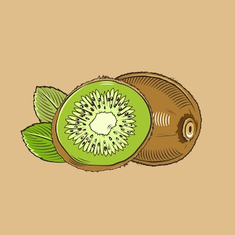 Kiwi im vintage-stil. farbige vektorabbildung