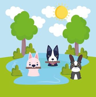 Kleine hunde auf dem wasser