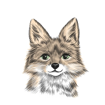 Kleiner fuchs, tierillustration in farbe. hand gezeichnete skizzenzeichnung. tierporträt, niedlicher fuchskopfhintergrund