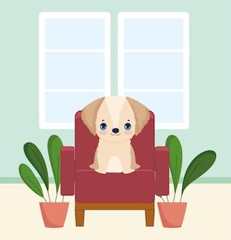 Kleiner hund auf stuhl