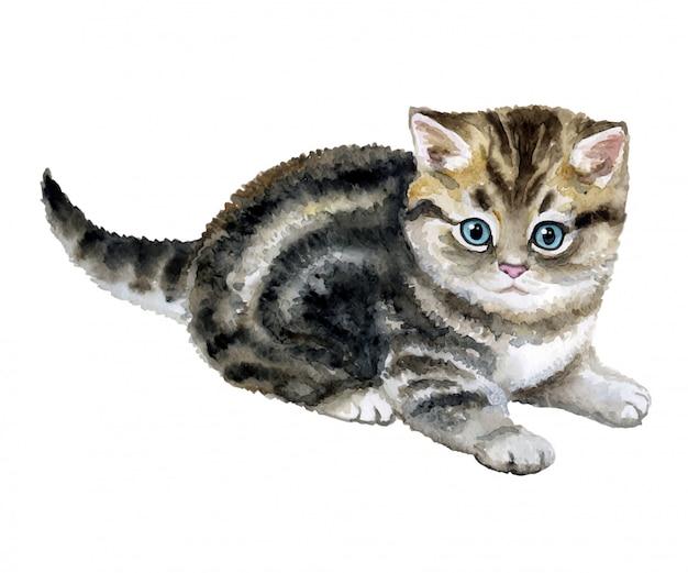Kleines flauschiges graues kätzchen in aquarell